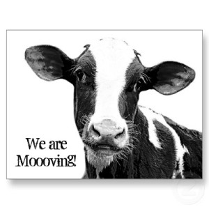 we_are_moving_moooving_change_of_address_cow_postcard-p239549355894948444envli_400